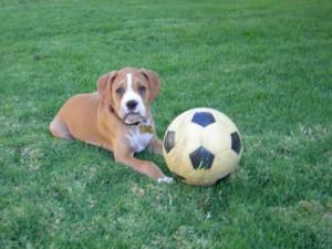 Rocco Soccer ball