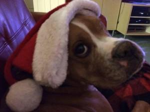 Santa Rocco says Happy Holidays