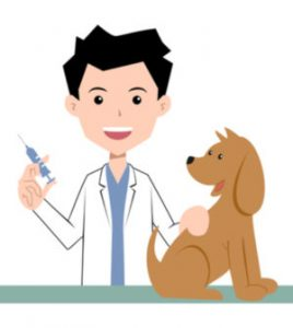 Get your puppy vaccinated